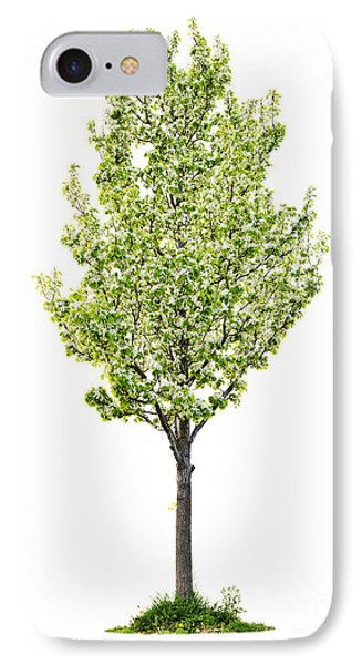 Isolated Flowering Pear Tree IPhone Case by Elena Elisseeva