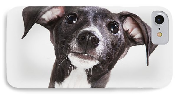 Italian Greyhound Puppy Spruce Grove Phone Case by Leah Bignell