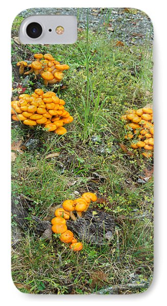 Jack Olantern Mushrooms 15 IPhone Case