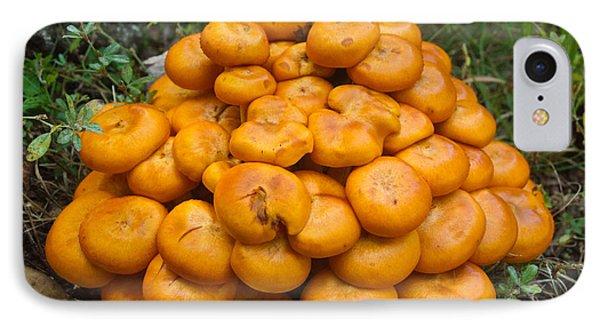 Jack Olantern Mushrooms 2 Phone Case by Douglas Barnett