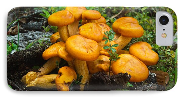 Jack Olantern Mushrooms 4 Phone Case by Douglas Barnett