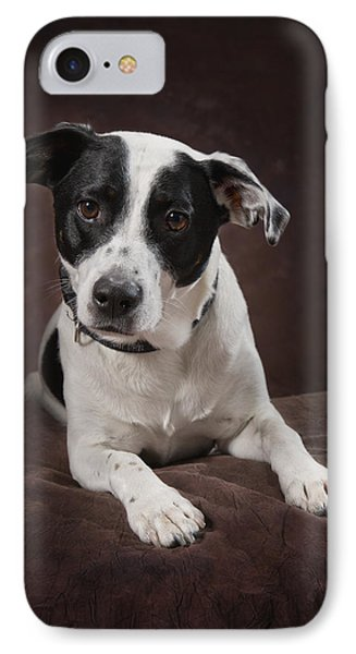 Jack Russell Terrier On A Brown Studio Phone Case by Corey Hochachka