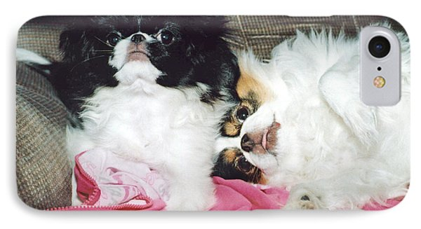 IPhone Case featuring the photograph Japanese Chin Dogs Begging For Treats by Jim Fitzpatrick