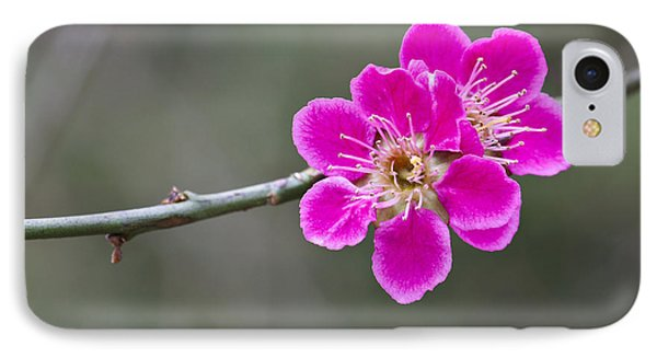 Japanese Flowering Apricot. IPhone Case