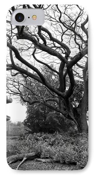 Japanese Lantern And Tree - Liliuokalani Park - Hilo Hawaii IPhone Case by Daniel Hagerman