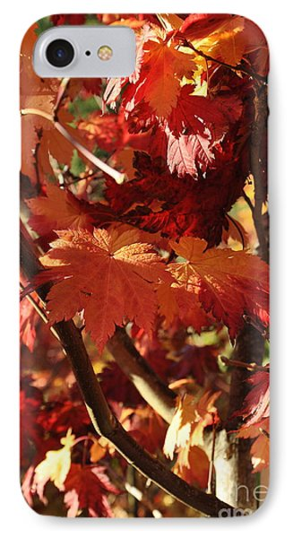 Japanese Maple 1 IPhone Case by Tanya  Searcy
