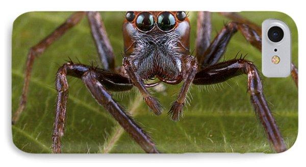 Jumping Spider Papua New Guinea Phone Case by Piotr Naskrecki