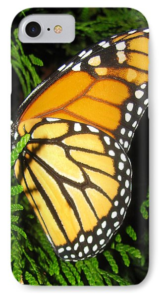 Just Out Of Cacoon Phone Case by Debra     Vatalaro