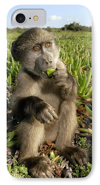 Juvenile Chacma Baboon Phone Case by Peter Chadwick