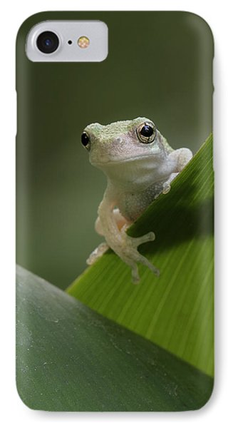 Juvenile Grey Treefrog IPhone Case by Daniel Reed