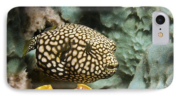 Juvenile Map Pufferfish Phone Case by Georgette Douwma