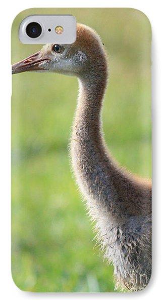 Juvenile Sandhill Crane Profile IPhone Case by Carol Groenen