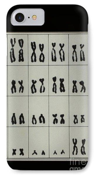 Karyotype Of Male Chromosomes Phone Case by Omikron