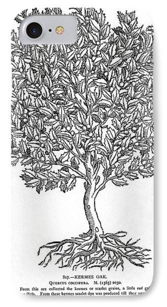 Kermes Oak Tree Phone Case by Granger