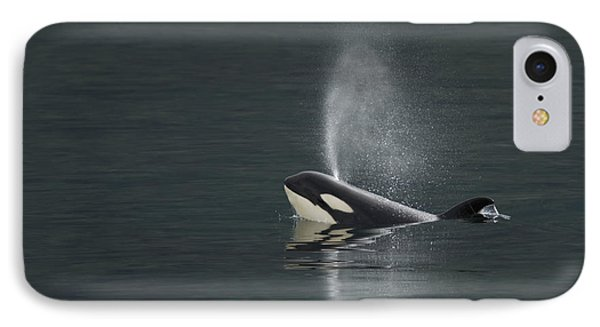 Killer Whale Calf Blows As It Surfaces Phone Case by Ralph Lee Hopkins