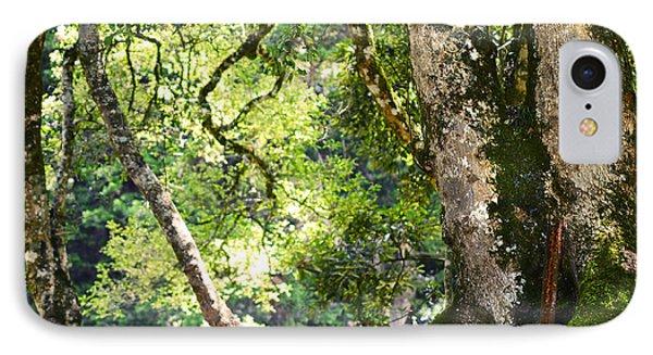 Kingdom Of The Trees. Peradeniya Botanical Garden. Sri Lanka Phone Case by Jenny Rainbow