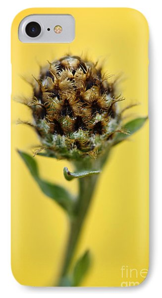 Knapweed Plant IPhone Case