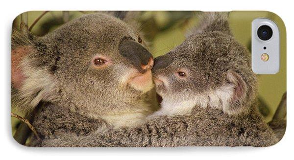 Koala Phascolarctos Cinereus Mother Photograph By Gerry Ellis
