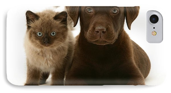 Labrador Pup And Birman-cross Kitten IPhone Case by Jane Burton