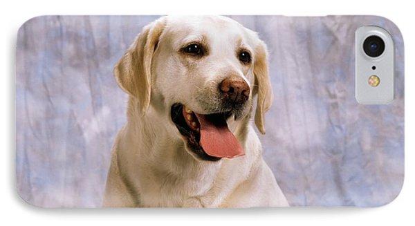 Labrador Retriever IPhone Case by The Irish Image Collection