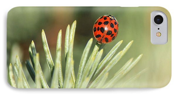 IPhone Case featuring the photograph Lady Beetle On A Needle by Penny Meyers