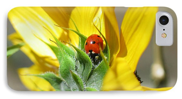 IPhone Case featuring the photograph Ladybug by Mitch Shindelbower