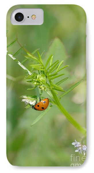 IPhone Case featuring the photograph Ladybug by Tannis  Baldwin