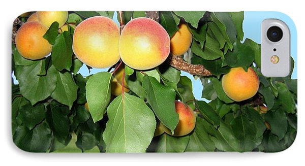 Lake Country Apricots Phone Case by Will Borden