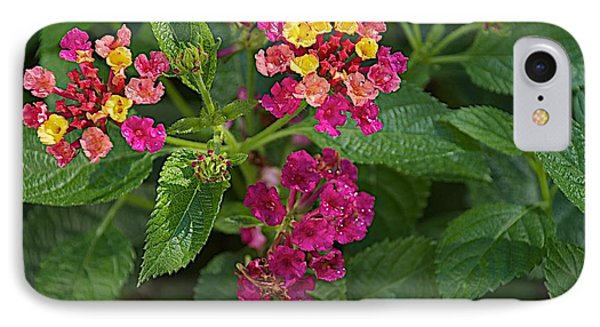 IPhone Case featuring the photograph Lantana by Joseph Yarbrough