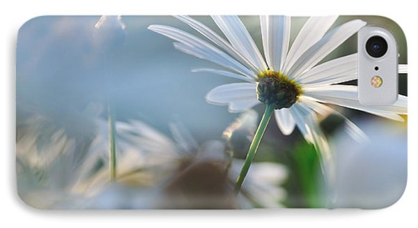 Late Sunshine On Daisies IPhone Case