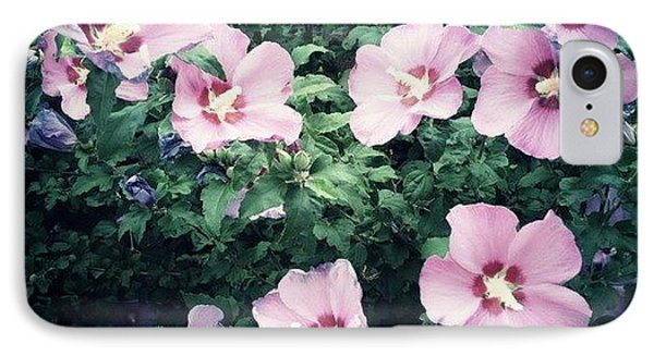 Lavender Hibiscus Flowers #hipstamatic IPhone Case