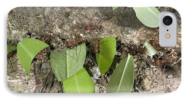 Leafcutter Ants Carrying Leaves Phone Case by Bob Gibbons