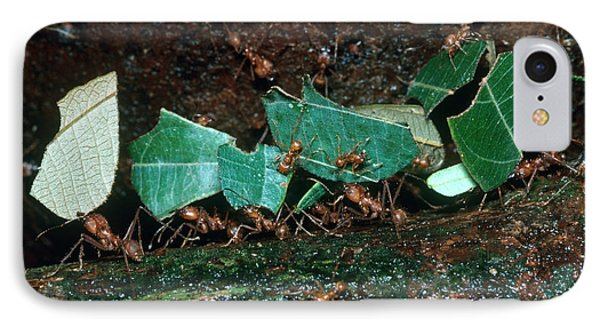 Leafcutter Ants IPhone Case by Gregory G. Dimijian