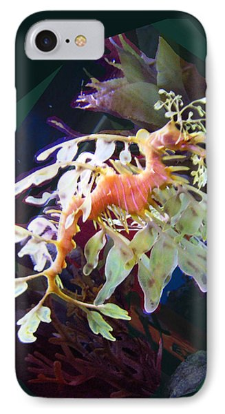 Leafy Sea Dragon IPhone Case by Ginny Schmidt