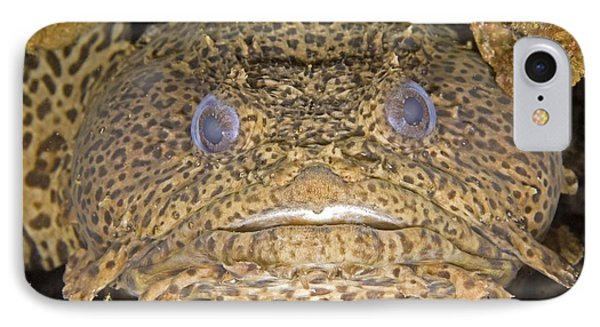 Leopard Toadfish Phone Case by Clay Coleman