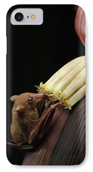 Lesser Long-tongued Fruit Bat Phone Case by Ch'ien Lee