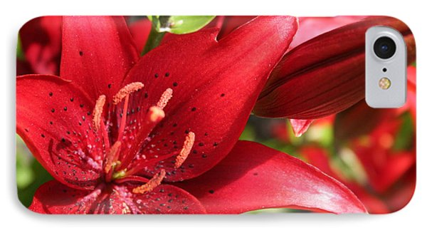IPhone Case featuring the photograph Lilies In Red by Laurel Talabere