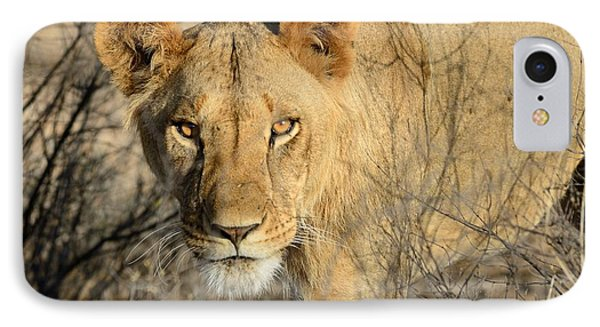 Lion Phone Case by Alan Clifford