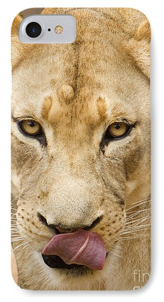 Lioness IPhone Case by Dustin K Ryan