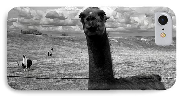 Llama IPhone Case by Cale Best