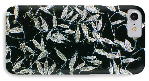 Lm Of Copepods, Marine Crustaceans In Plankton Phone Case by Sinclair Stammers
