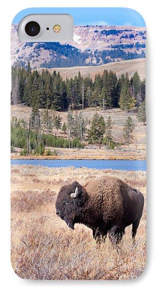 Lone Buffalo IPhone Case by Cindy Singleton