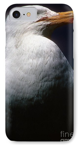 Long Island Seagull IPhone Case by Mark Gilman