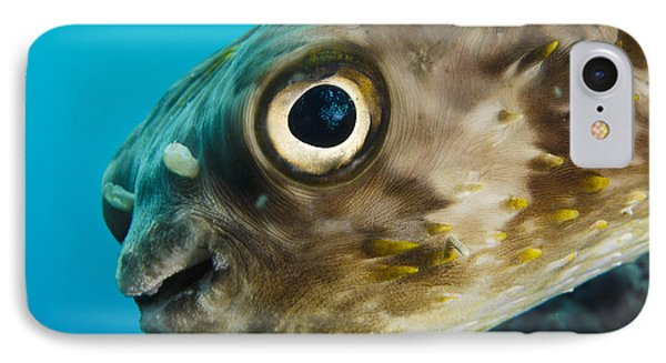 Long-spine Porcupinefish Diodon IPhone Case
