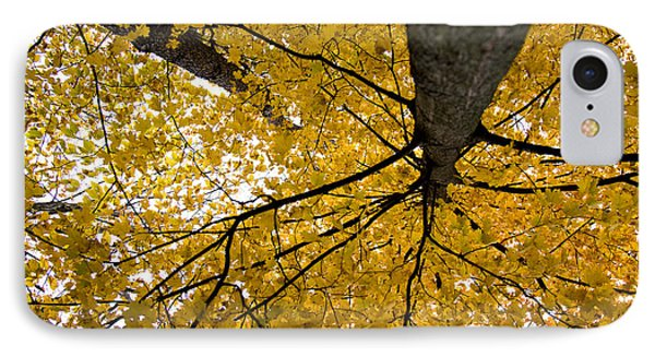 Look Up It Is Fall IPhone Case by John Crothers