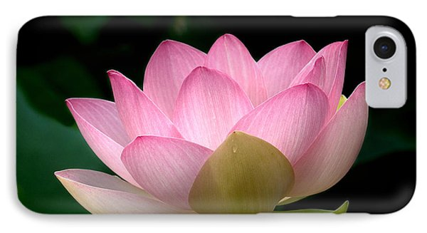 Lotus Beauty--blushing Dl003 IPhone Case by Gerry Gantt