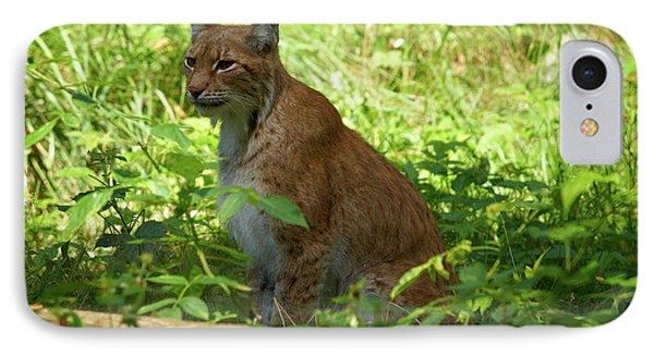 Lynx IPhone Case by Jouko Lehto