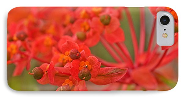 IPhone Case featuring the photograph Macro Euphorbia Fireglow Plant by Valerie Garner