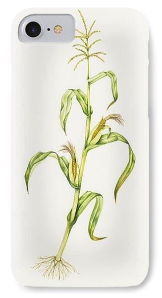 Maize (zea Mays) Phone Case by Lizzie Harper
