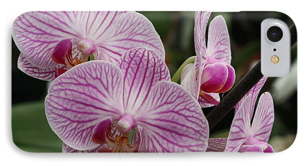 Majestic Orchids Phone Case by Carol Groenen